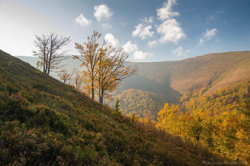 пейзаж, октябрь, небо, карпаты, осень, красиво, деревья, боржава Тень и солнцеphoto preview