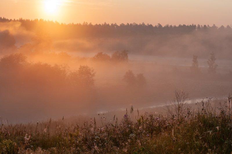 июль, лето, утро, восход, туман, природа Июльphoto preview