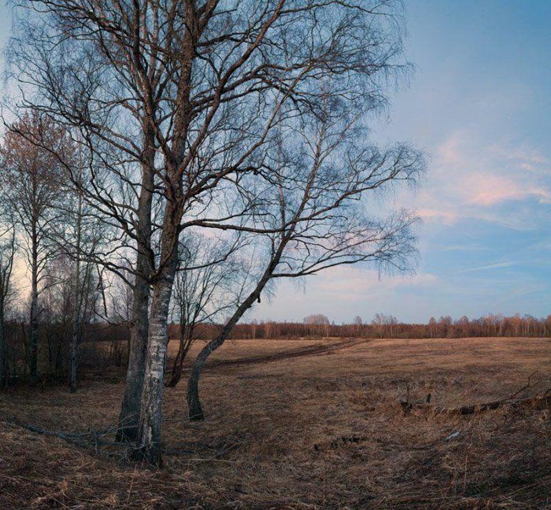 весенний, вечер, в, поле Весенний вечер в полеphoto preview