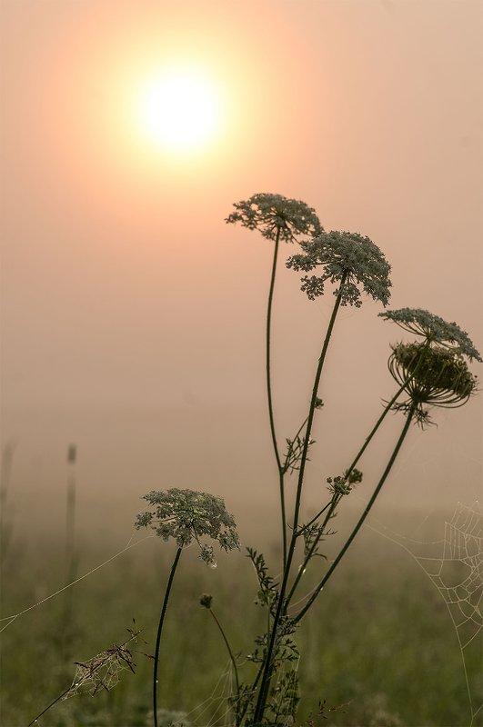 fog,morning,flowers,summer Norning silencephoto preview