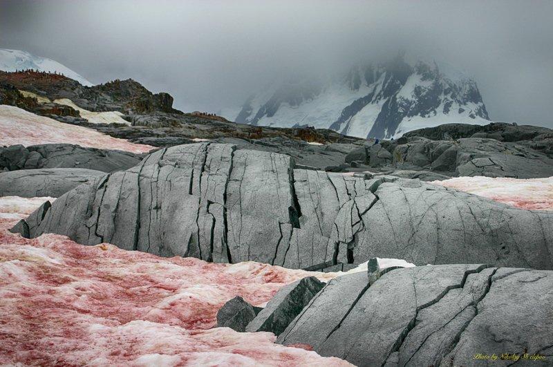 Антарктида 56photo preview