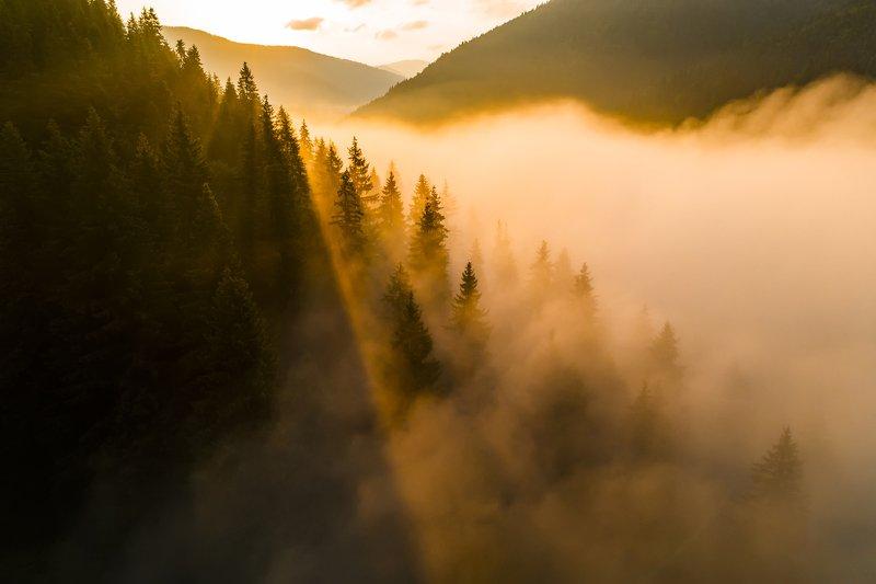 карпаты, туман, рассвет Над туманамиphoto preview