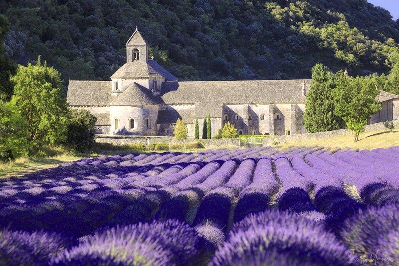 abbaye norte-dame de senanque. provence. Abbaye Norte-Dame de Senanque. Provence.photo preview