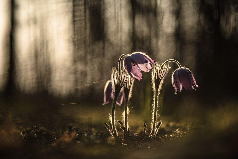 сон трава, свет, цвет, весна, апрель, маклок, воронеж, геннадий мещеряков А утром сон...photo preview