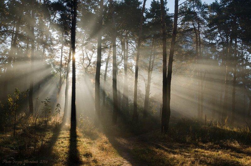 пейзаж, природа, лес, октябрь осень, лучи, утро, украина Осенние лучиphoto preview