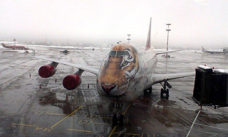 Самолет  авиация аэропорт тюнинг Хищная авиацияphoto preview