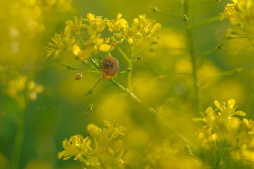 Солнечный Жёлтый