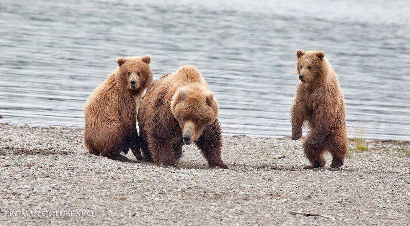 Опасность / Danger. Alaskaphoto preview
