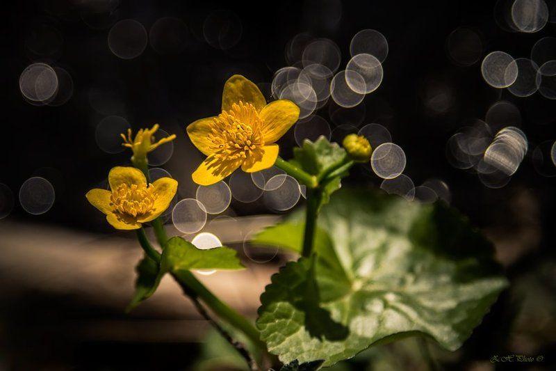 yellow, flowers, bokeh, green, dancing We are dancing, my darling!photo preview
