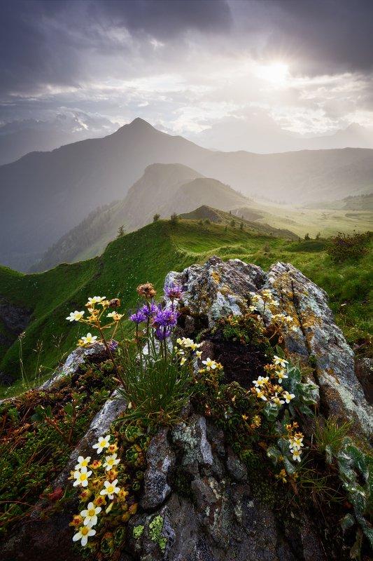 evening, light, dolomites, dolomiti, mountains, flowers, rocks, mood, travel, italy, alps, peaks, hills, light, sunset, clouds, sky Rock Gardenphoto preview