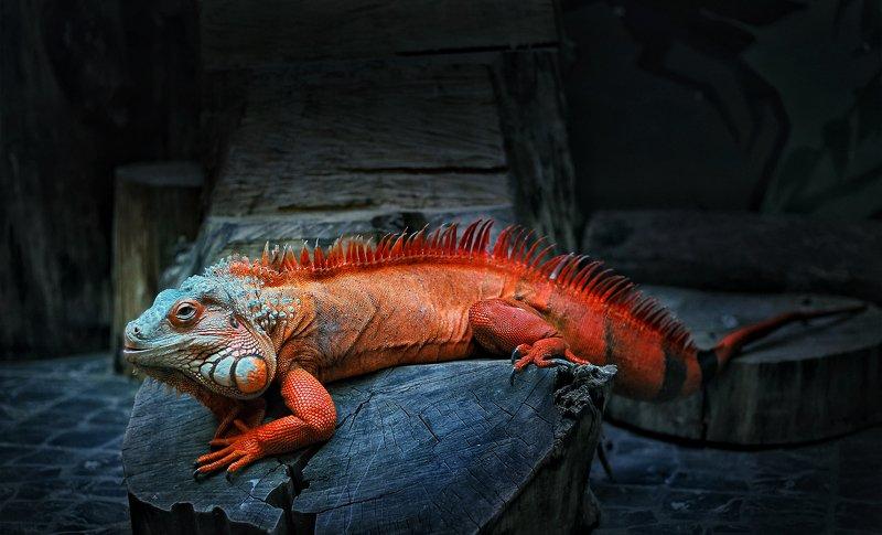 ---= про динозаврика =---photo preview