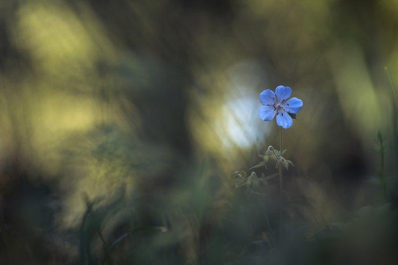 Magic gardenphoto preview