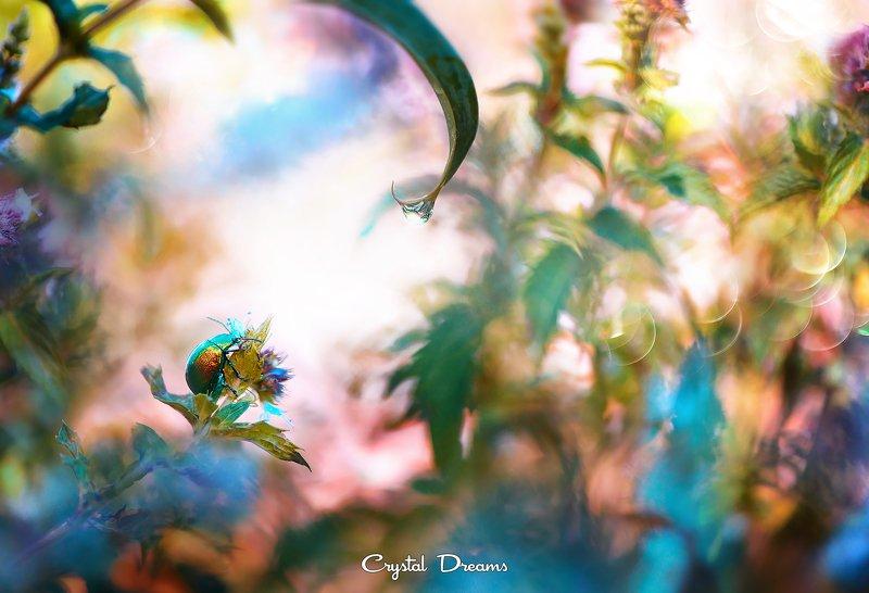 сrystal dreams, macro, summer, color, art, nature. \