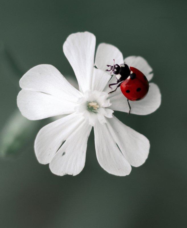 макро, природа, nature, macro, насекомые, insect photo preview