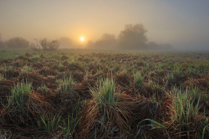 2019, россия, пейзаж, весна, май, утро, солнце, туман, трава, роса, паутина, деревья, луг Пробуждениеphoto preview