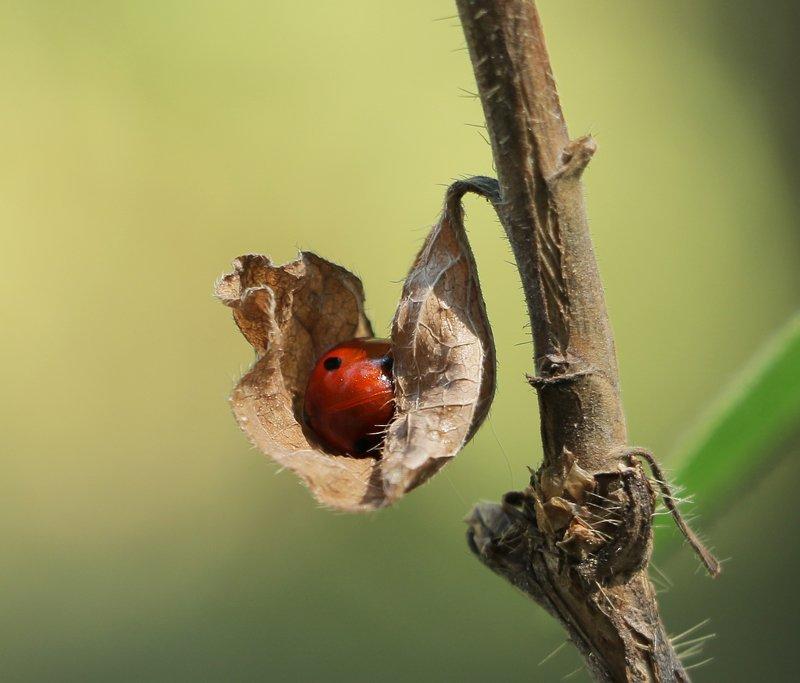 природа, шаварёв, фотография, Яслиphoto preview