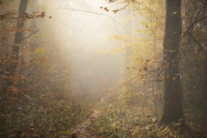 Лесные тропкиphoto preview