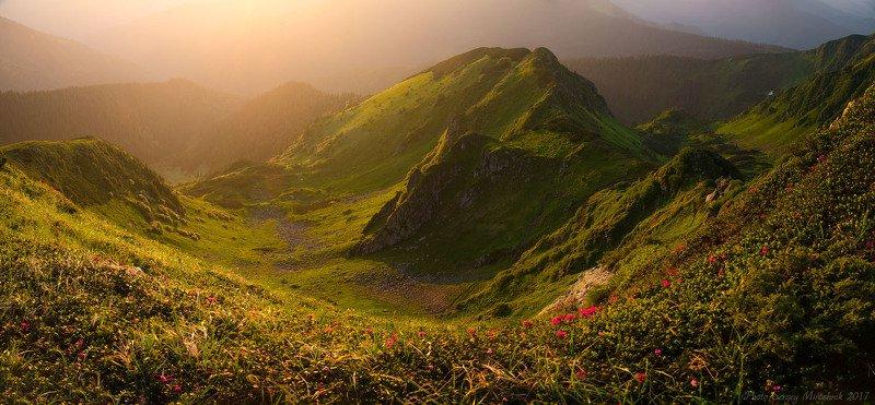 пейзаж, природа, солнце, горы лето, утро, путешествие, трекинг, червона рута, июнь, цветы, украина, карпаты Долина желанийphoto preview
