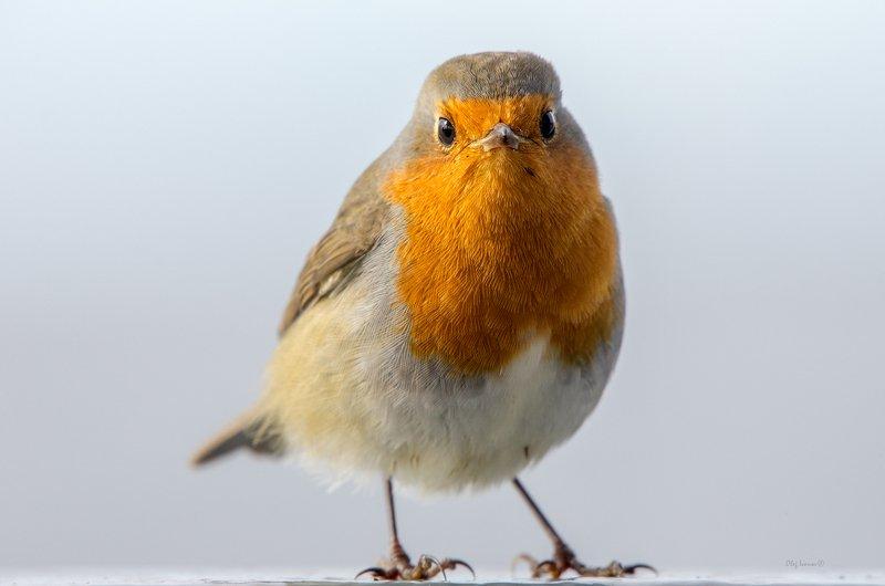 птицы, птички, корабли, суда, море, балтика, балтийск, балтийское море О кораблях и птичкахphoto preview