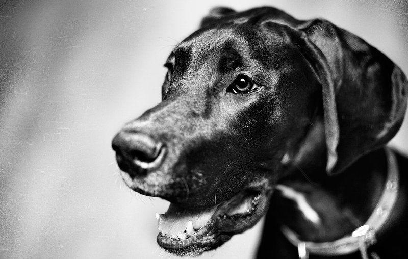 собака, дог, животные, лучший друг человека Dogphoto preview