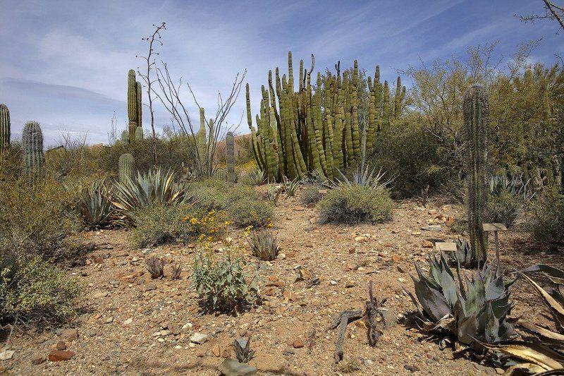 пустыня, аризона, сонора Хила или Desierto de Sonoraphoto preview