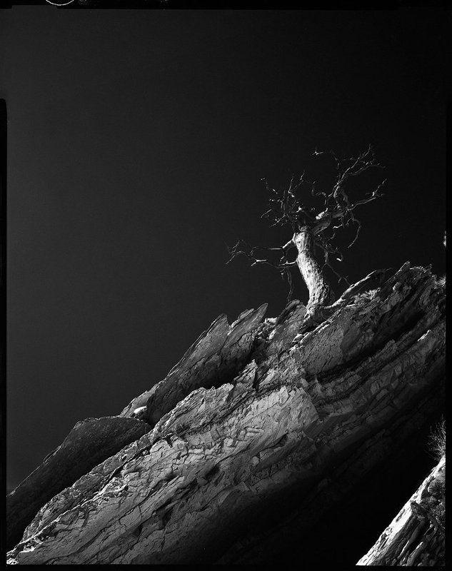 и на камнях растут деревьяphoto preview