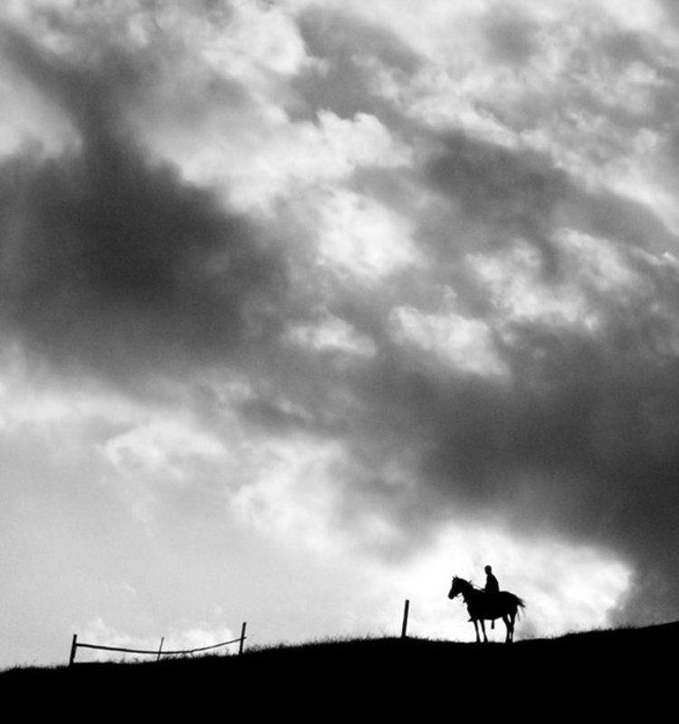 карпаты, всадник, лошадь * * *photo preview