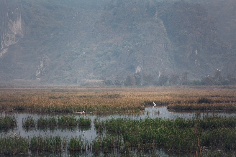 vietnam, morning,fog,travel, bird Morning poetryphoto preview