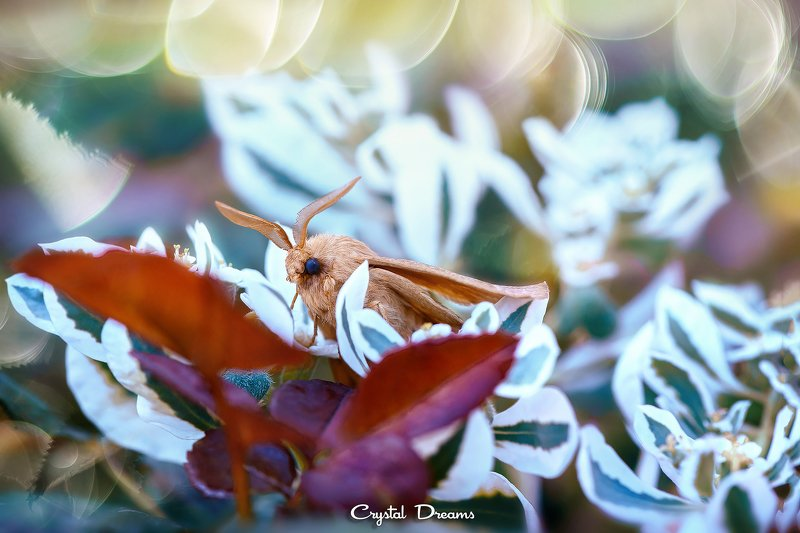 crystal dreams, macro, autumn, color, art, nature, butterfly \