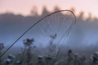 Утренних грёз паутина