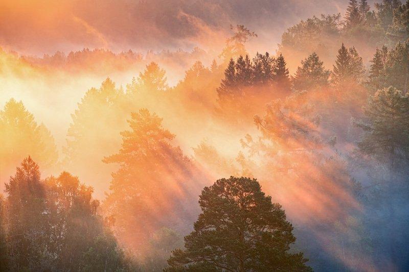 Краски летнего утраphoto preview
