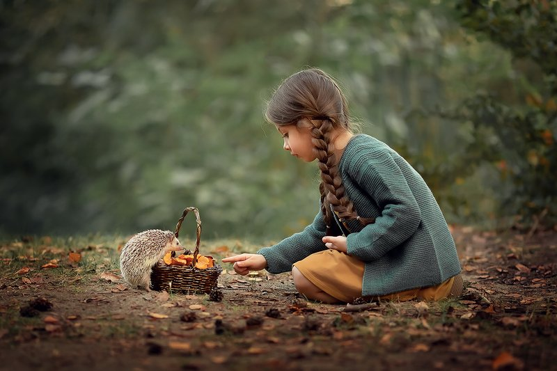 ёжик лес грибы девочка лесная история Дружбаphoto preview
