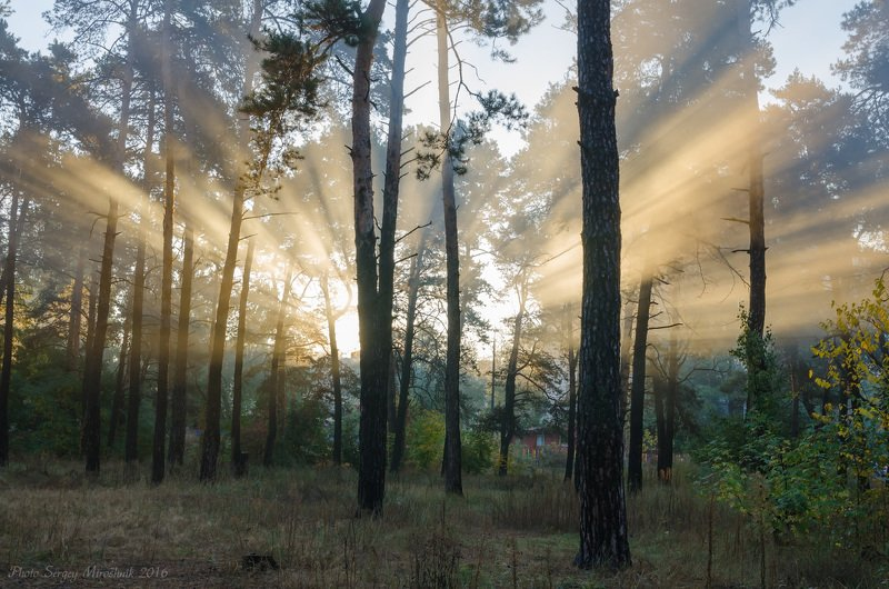 пейзаж, природа, лес, лучи  солнце, осень, туман, утро, украина Осенние лучиphoto preview