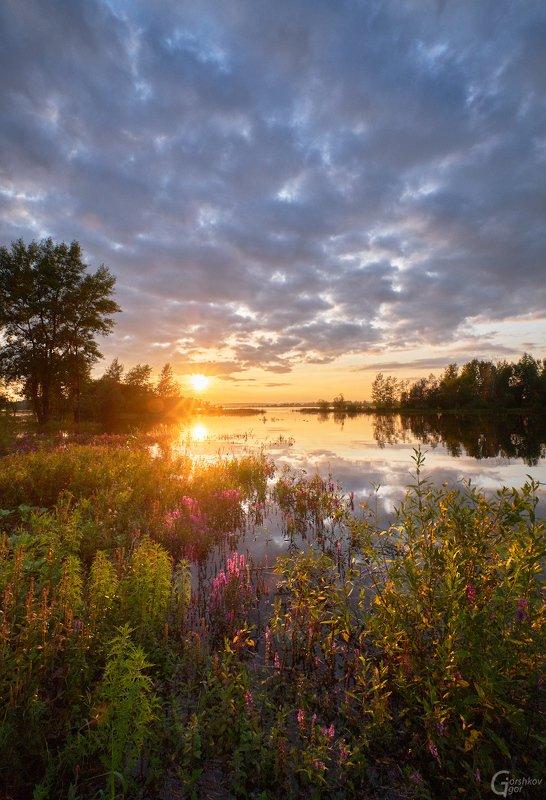 кама,река,лето,цветы,закат,вечер,природа Закат на Камеphoto preview