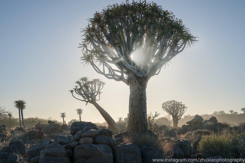 Namibia Glowing treephoto preview