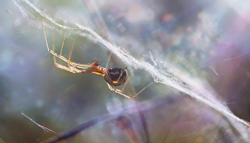 паук,лапы,вода,глаза,свет,блик,солнце ***photo preview