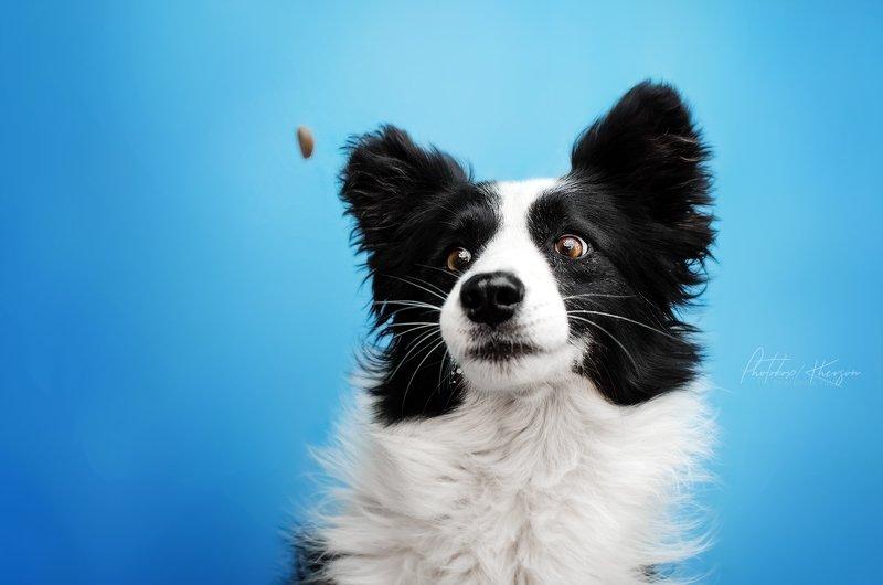 собака, анималистика, портрет Моментphoto preview