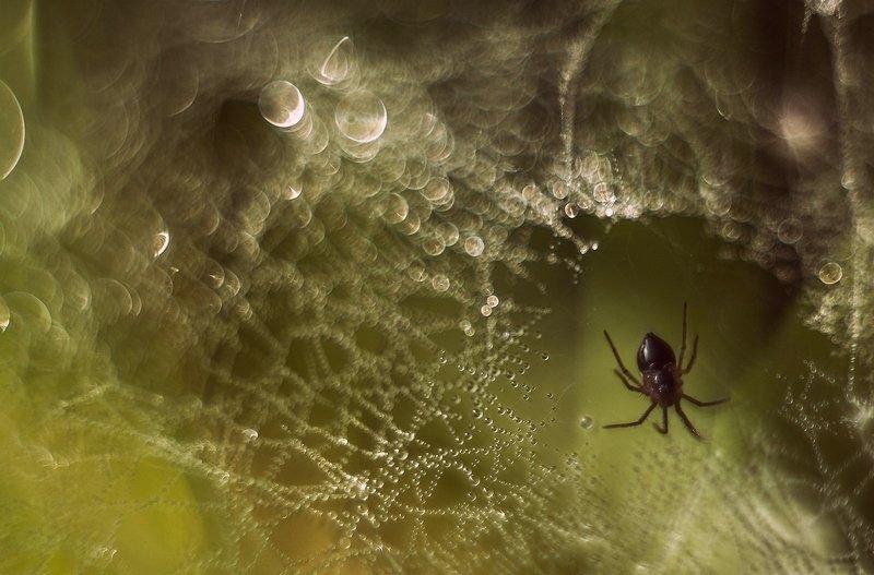 утро,роса,трава,паутина,паук В царстве паукаphoto preview