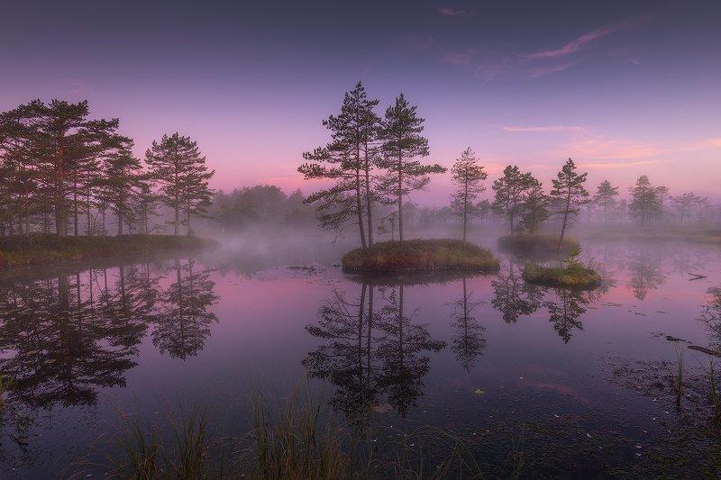 В плену болотных озерphoto preview