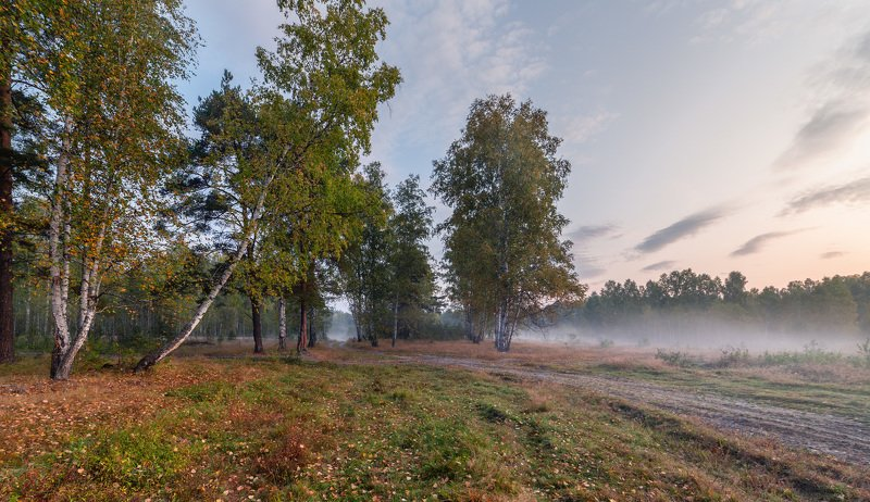 сентябрь, лес, туман, дорога, рассвет Сентябрь в лесу.photo preview