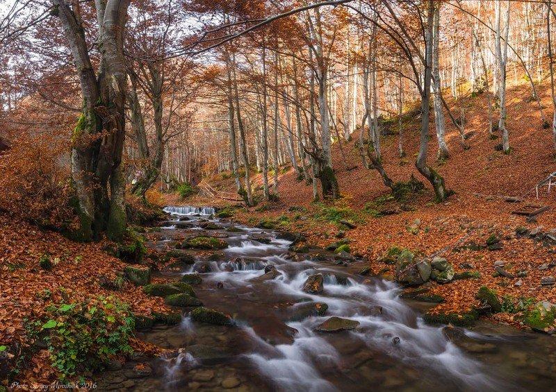 пейзаж, октябрь, вода, карпаты, осень, красиво, деревья, боржава Красочная Карпатская осеньphoto preview