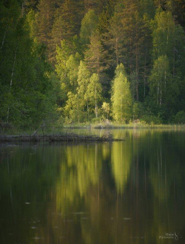 ленинградская область, карельский перешеек, озеро, лето, зелень, отражения, симметрия, закат в лесу, лес Смородинское озероphoto preview