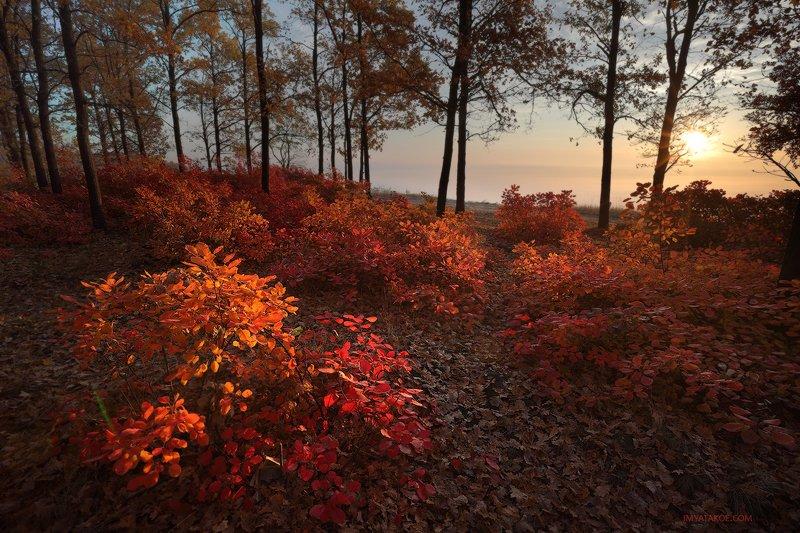 красный осеньphoto preview