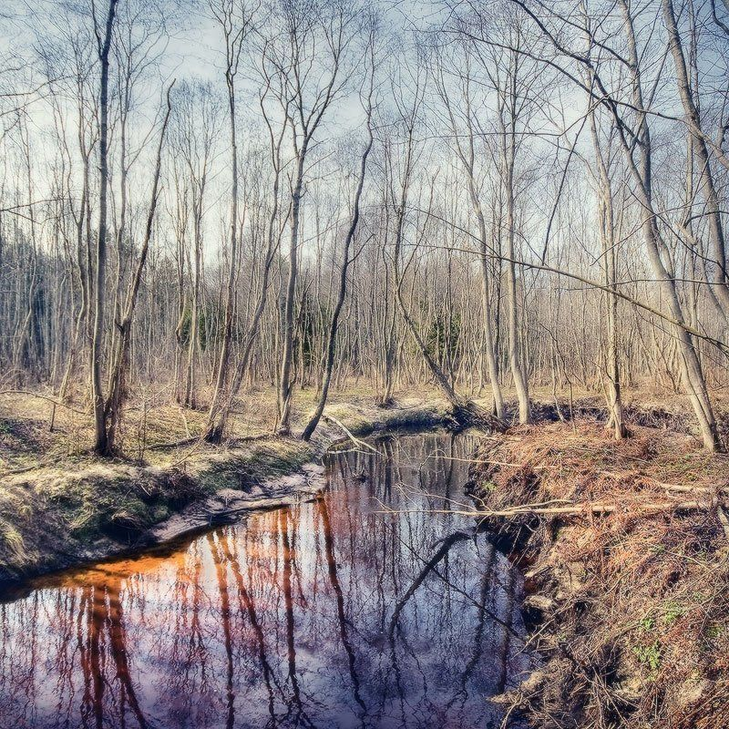 река, бикложа, лес, отражение, стволы, дно | Лесная река |photo preview