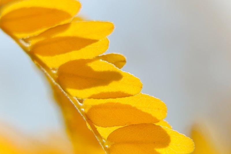 шаварёв, природа, фотографии, осень, макро, Палитра осени.photo preview