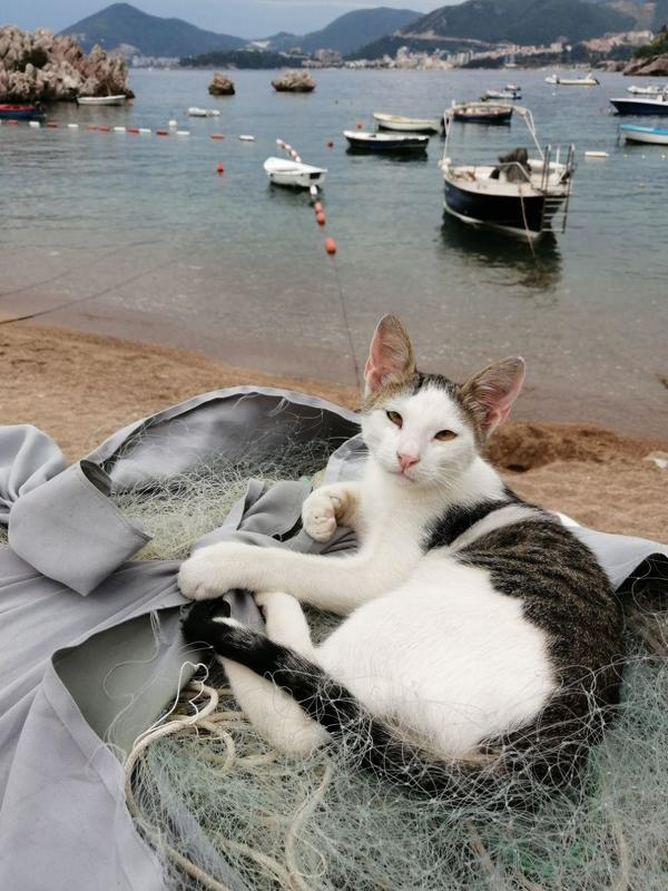 cat  Montenegro catphoto preview