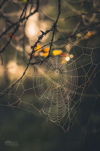 Spiders world