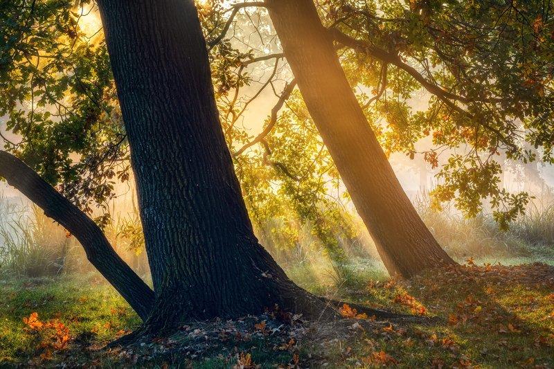 пейзажи Чехия туман утро лес осень листва рассвет лучи солнце парк деревья  природа путешествия В осенних лучах ...photo preview