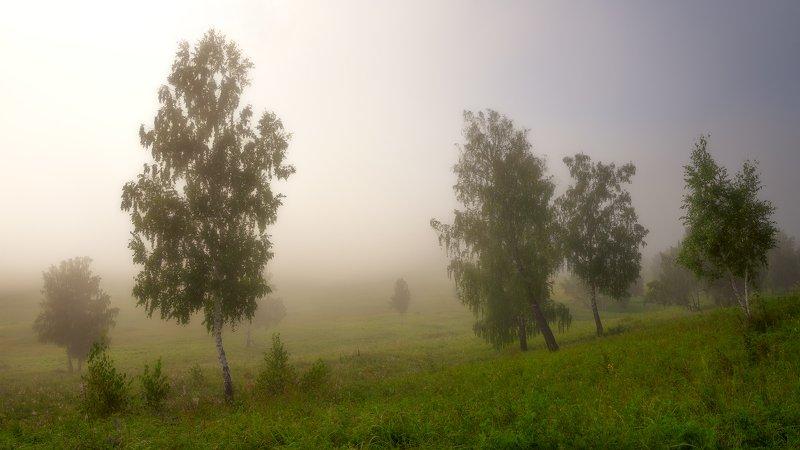 лето утро березы туман У БЕРЁЗ ПОД КОСОГОРОМphoto preview