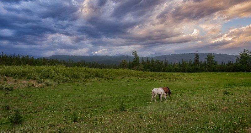 луг кони горы облака предгорье саяны ИДИЛЛИЯphoto preview